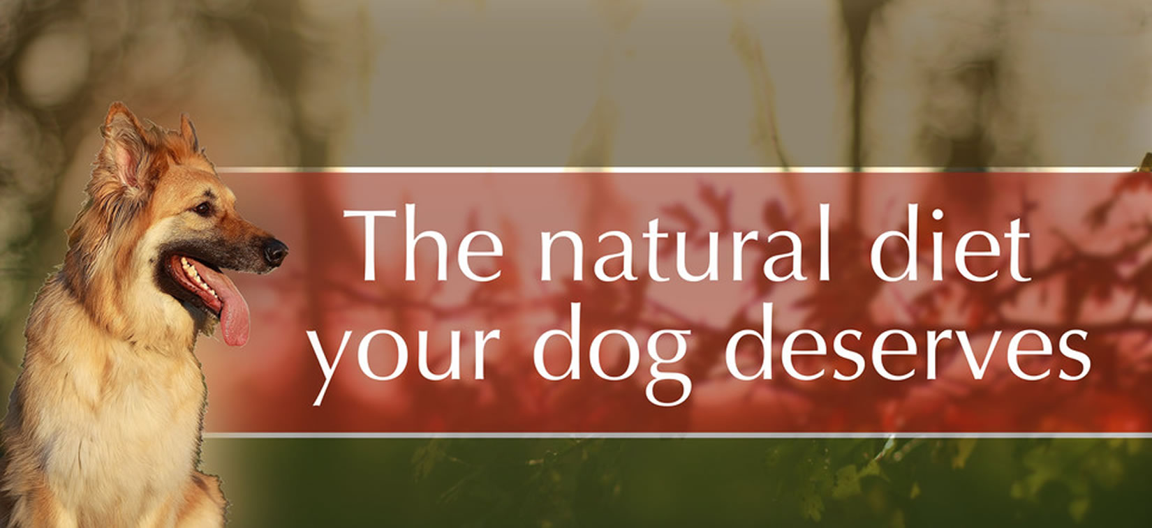 The Natural Diet For Your Dog